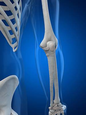 Human Joint Digital Art - Elbow, Artwork by Sciepro