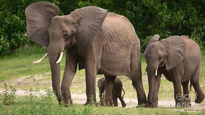 Photograph - Elephant Family by Mareko Marciniak