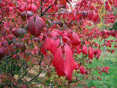 Photograph - Fall Foliage by Richard Nickson
