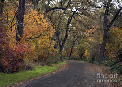 Fall In Bidwell Park Art Print