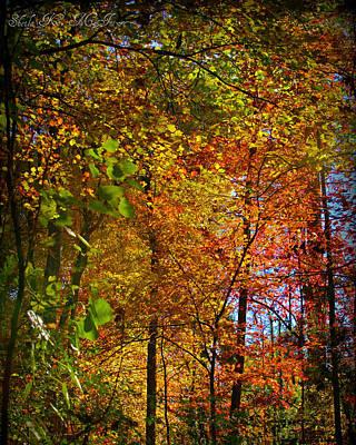 Photograph - Fall In North Carolina by Sheila Kay McIntyre