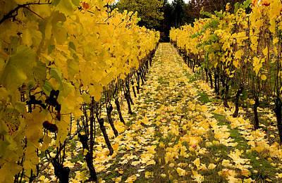 Pinot Noir Photograph - Fall In The Vineyard by Jean Noren