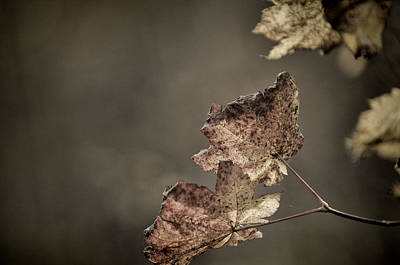 Photograph - Fall Remains by Sandra Sigfusson