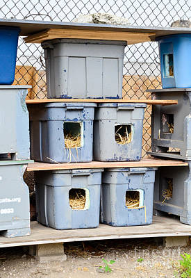 Advocacy Photograph - Feral Cat Shelter by Photo Researchers