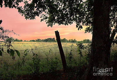 Photograph - Field Of Dreams by Cris Hayes