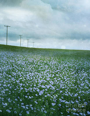 Photograph - Field Of Flax Seed Flowers On The Prairies by Sandra Cunningham