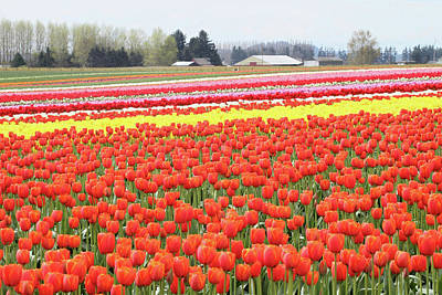 Photograph - Field Of Tulips by Pierre Leclerc Photography