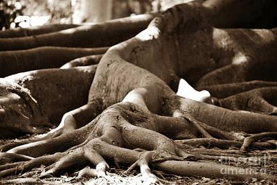 Photograph - Fig Tree Roots by Angela Murray