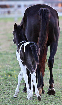 Photograph - Filly by Elizabeth Hart