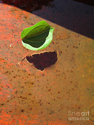 Katsura Wall Art - Photograph - Floating by Addie Hocynec