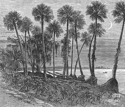 Florida: St. Johns River Print by Granger