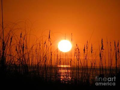 Digital Art - Florida Sunset by Vicky Tarcau