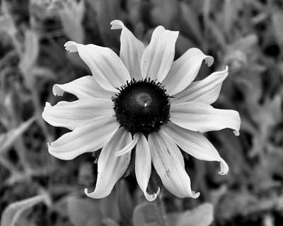 Photograph - Flower by Brian Hughes