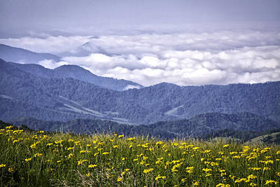 Golden Ragwort Photograph - Flowers And Mountains...warm And Cool by Rob Travis