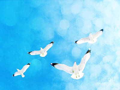 Art Print featuring the photograph Fly Free by Robin Dickinson