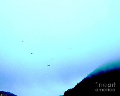 Digital Art - Fog Flight by Lizi Beard-Ward