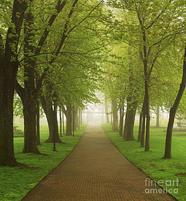 Path Photograph - Foggy Park by Elena Elisseeva