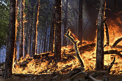 Heat Lightning Photograph - Forest Fire Caused By Lightning by Mark Thiessen
