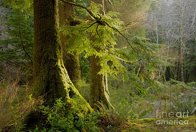 Photograph - Forest Glow by Idaho Scenic Images Linda Lantzy