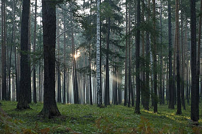 Up Up And Away - Forest Light-5 by Vladimir Kholostykh
