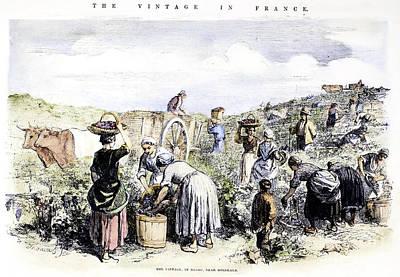 France: Grape Harvest, 1854 Art Print by Granger