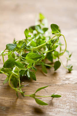 Photograph - Fresh Thyme by Kati Molin