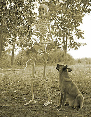 Human Skeleton Photograph - Friends by Betsy Knapp