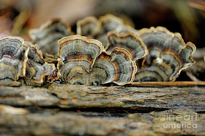 Photograph - Fungus by Nancy Greenland