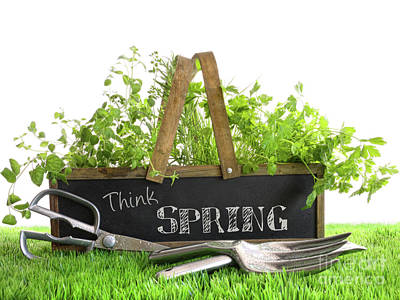 Spring Photograph - Garden Box With Assortment Of Herbs And Tools by Sandra Cunningham