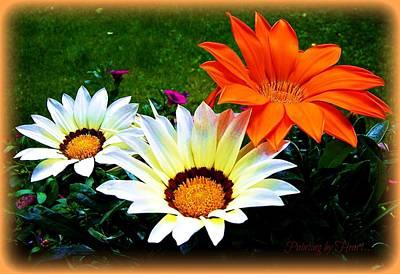 Photograph - Garden Daisies by Deahn      Benware