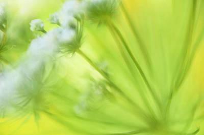 Decorativ Photograph - Garden Flower by Silke Magino