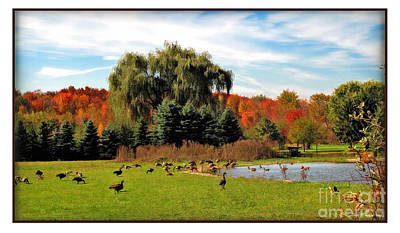 Photograph - Geese In Ohio by Joan  Minchak