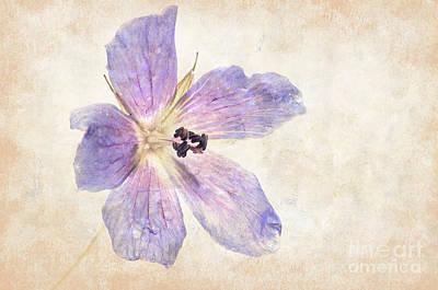 Photograph - Geranium by Marion Galt