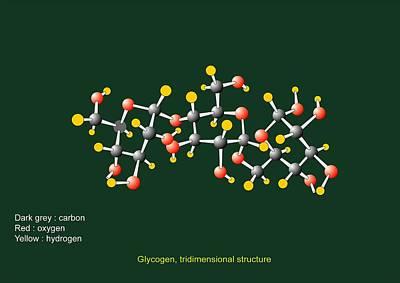 Glycogen Units, Molecular Model Art Print by Francis Leroy, Biocosmos