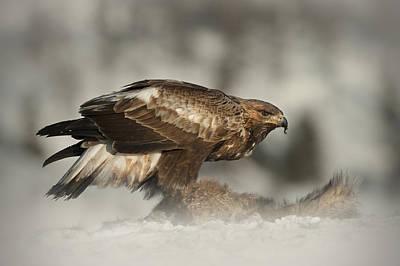 Golden Eagle Art Print by Andy Astbury