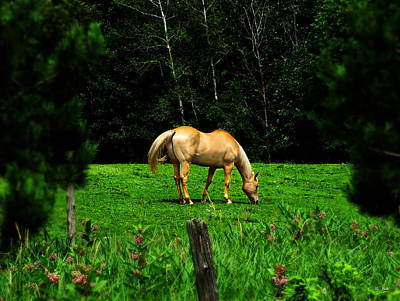 Photograph - Golden Horse by Ms Judi