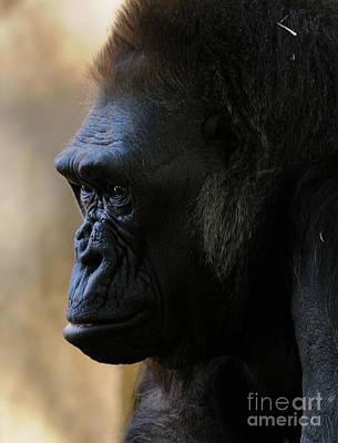 Gorilla Art Print by Marc Bittan