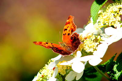 Photograph - Graceful Butterfly by Jose Lopez