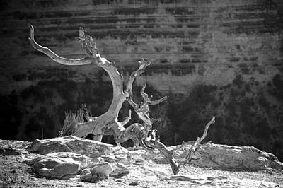 Photograph - Grand Canyon Dead Tree Bw by Julie Niemela