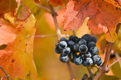 Garden Fruits - Grapes on the Vine - Horizontal by Karen  W Meyer