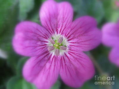 Bloom Photograph - Grateful by Tina Marie