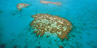 Whitsunday Photograph - Great Barrier Reef, Australia by Peter Walton Photography