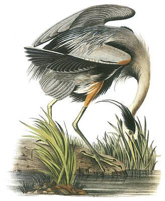 Heron Painting - Great Blue Heron by John James Audubon