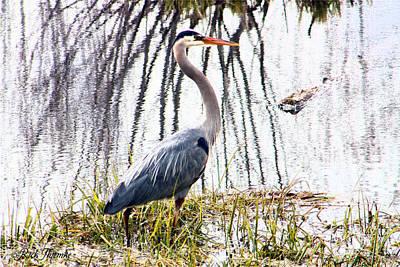 Stork Mixed Media - Great Blue Heron by Rick Thiemke
