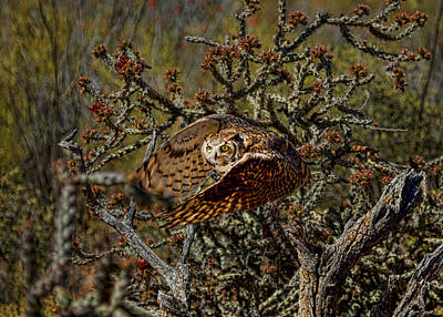 Photograph - Great Horned Owl by Dan Nelson