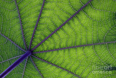 Green Leaf Art Print by Urban Shooters