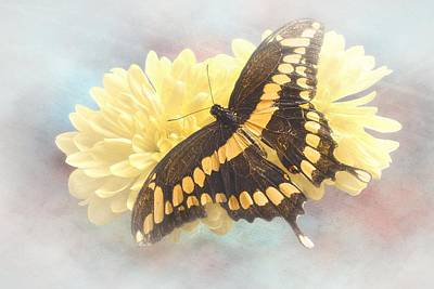 Photograph - Grunge Giant Swallowtail by Rudy Umans