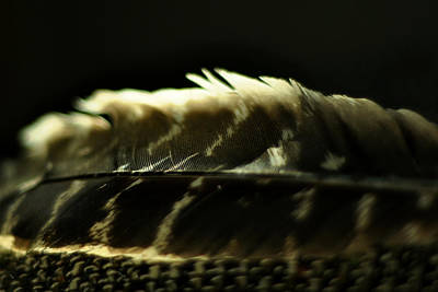 Photograph - Hawk Feather by Rebecca Sherman