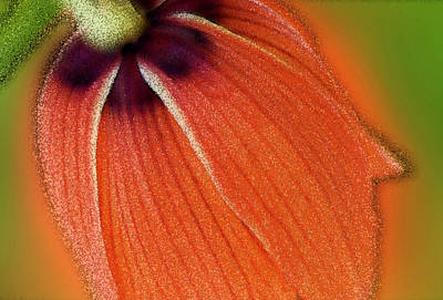 Photograph - Head Of A Flower  by Cliff Norton