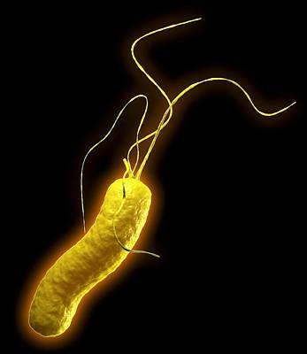 Campylobacter Pyloridis Photograph - Helicobacter Pylori Bacterium by Roger Harris
